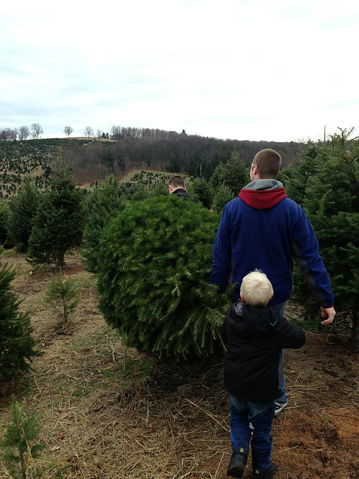 Where You Can Buy a Hudson Valley-Grown Christmas Tree